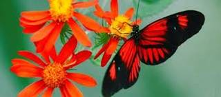 Judy Istock Butterfly Haven